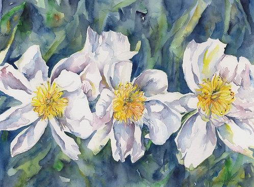 Watercolor White Peonies Original Painting