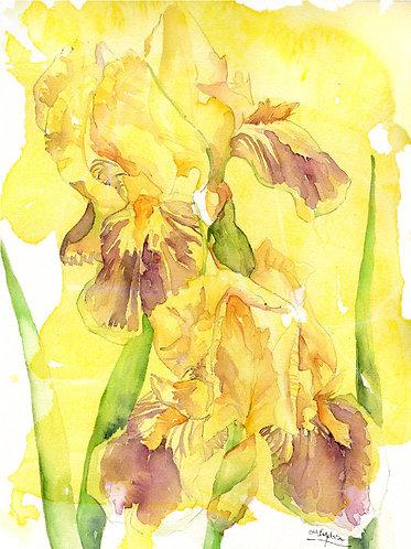 Irises Watercolor Original Painting
