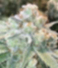Ohio Hemp Cannabis Event June 27, 2020