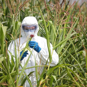 GM Crops - Invest or Not?
