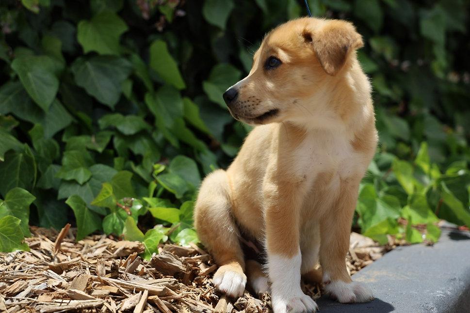 Puppy background website .jpeg
