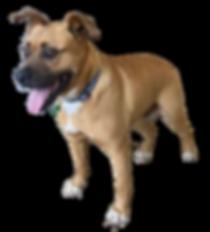 dog_cutout_5.png