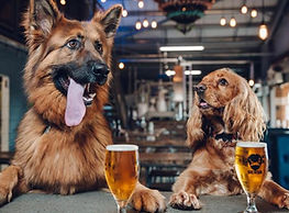 Dogs and beer.jpg
