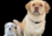dog_cutout_4_edited.png