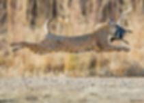 National Wildlife Photo Winners.png