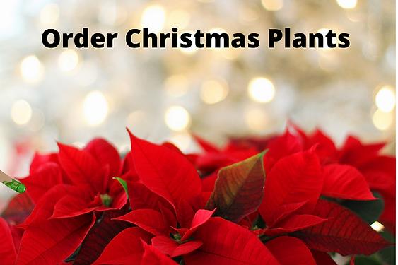 Order Christmas Plants