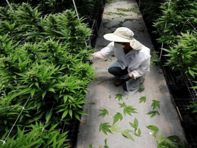 Like cool, man: Israel decriminalises personal cannabis use