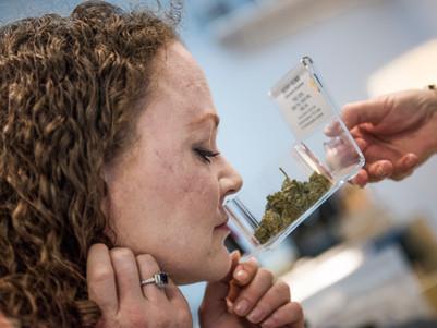 'Cannabis could get rid of the Budget deficit': Senator Derryn Hinch