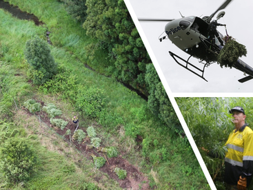 Nearly $12 million worth of cannabis plants destroyed in major bust