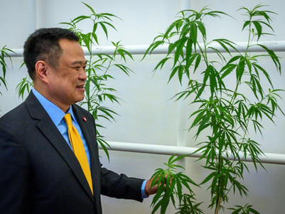 Thailand government department pushing for cannabis use in Thai traditional medicines