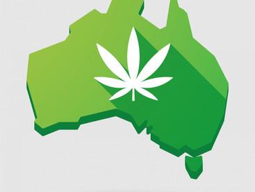 Medicinal cannabis black market worries TGA