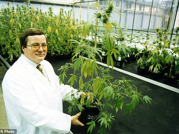 'Dr Pot' stashes away a cannabis fortune with some NHS help: Pharma boss earns £5.8m as drug