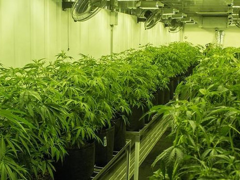 Medicinal cannabis forum set for Brisbane