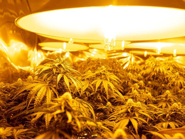 Report finds Covid-related stress cranks up cannabis use