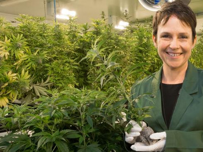 Victorian government minister visits medicinal cannabis crops in Canada