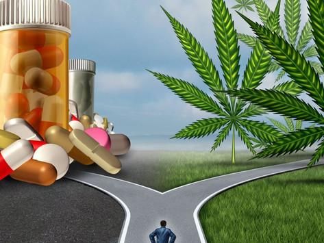 Can cannabis help reduce opioid deaths?