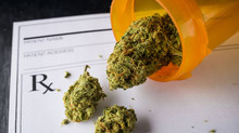 Cannabis offers immediate relief from symptoms of nausea, but product use matters
