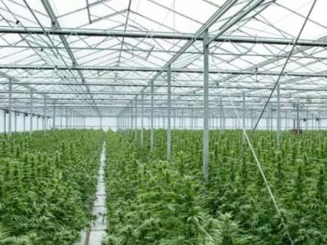 UK set for cannabis boom as GW Pharma storms ahead
