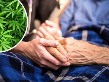 Cannabis could be used in dementia treatment after world-first trial in Perth