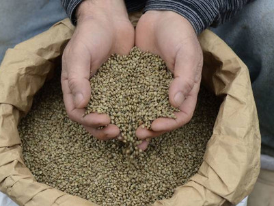 Hemp food sales get green light from regulator - now it's up to government