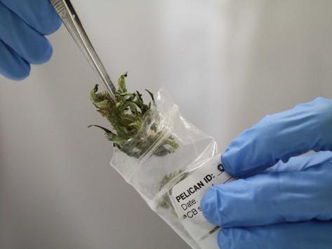 Epilepsy drug made from marijuana approved by US health regulators