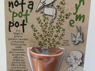 New NT teachers baffled by anti-marijuana pot plant gift from Education Department