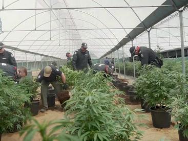 Crackdown on Perth cannabis grow houses targets Vietnamese gang members