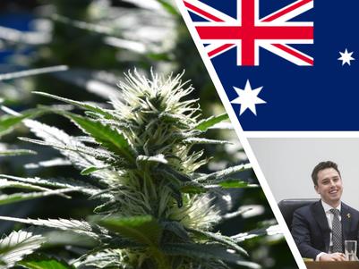 Labor backbencher 'very confident' cannabis bill will pass