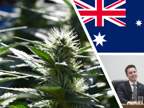 Labor backbencher 'very confident' cannabis bill will pass