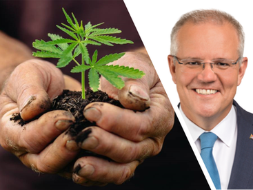 Scott Morrison sends mixed messages on legalised cannabis