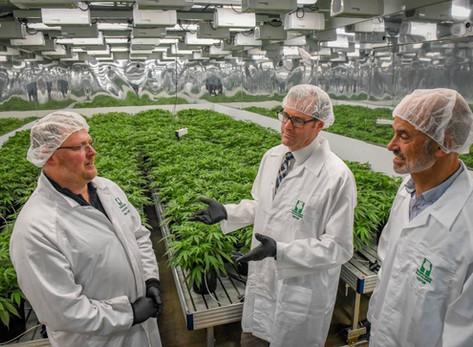 Opium poppy producer Tasmanian Alkaloids cuts ribbon on $10m medicinal cannabis facility