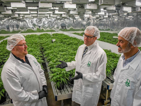 Opium poppy producer Tasmanian Alkaloids cuts ribbon on $10m medicinal cannabis facility
