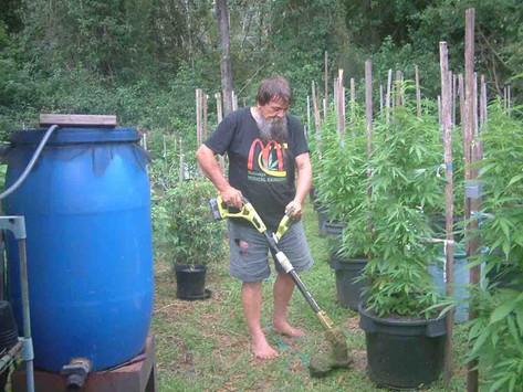Medical-cannabis producer again locked up