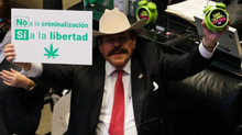 Mexico cannabis bill: Senate vote paves way for legalisation