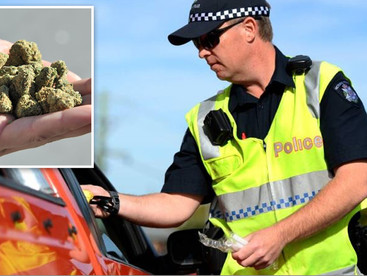 Lawyers: Australia's 'disproportionate' drug driving laws need overhaul as part of cannabis
