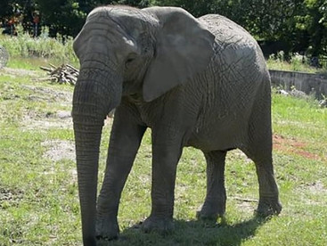 Poland: Warsaw Zoo plans to give elephants cannabidiol to help them relax and stop fighting