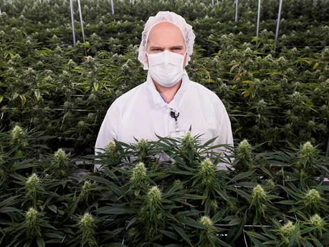 Medical cannabis doesn't need to be kosher, says leading certification agency