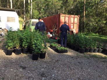 280 cannabis plants seized, man charged