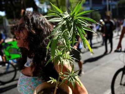 Mexico cannabis: Lower house passes recreational cannabis bill