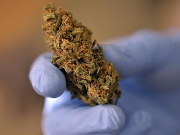 University of Notre Dame goes green on cannabis trial for dementia patients