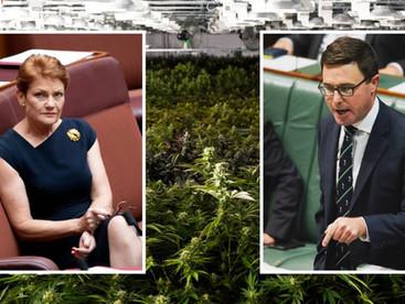 #Coronavirus: Govt rushes medical cannabis bill to get Pauline Hanson's vote