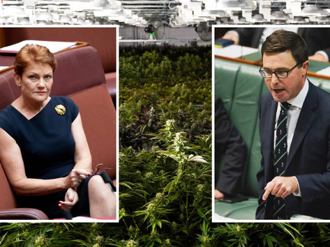 #Coronavirus: Govt rushes medical cannabis bill to get Pauline Hanson's vote