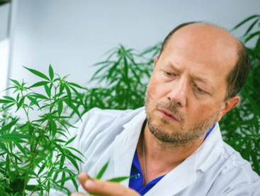 Cannabis shows promise blocking coronavirus infection: Canadian researcher
