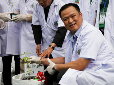 Thailand: Cannabis cultivation scales up