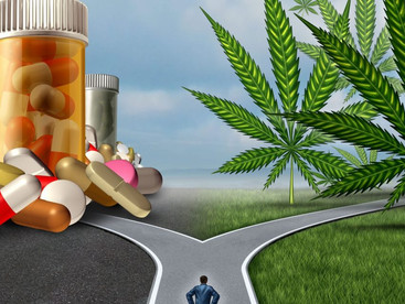 Is cannabis one answer to the opioid epidemic?