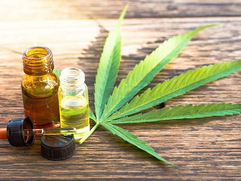 Cannabis extracts may reduce the risk of dying from Covid-19 by stopping the immune system attacking