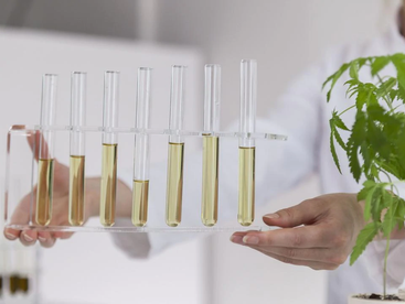 Australian research breakthrough finds cannabis could treat gonorrhoea, meningitis