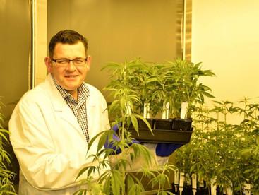Door open for medicinal marijuana investment in North East