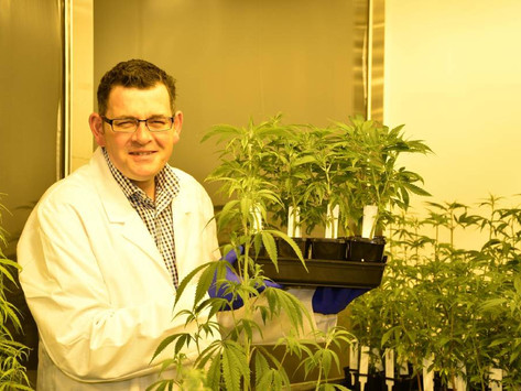 Door open for medicinal marijuana investment in North East