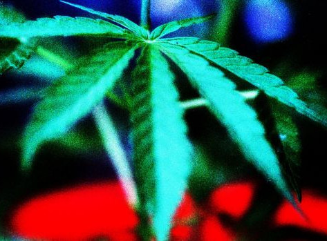 Surge in support to decriminalise marijuana, multi-decade survey finds